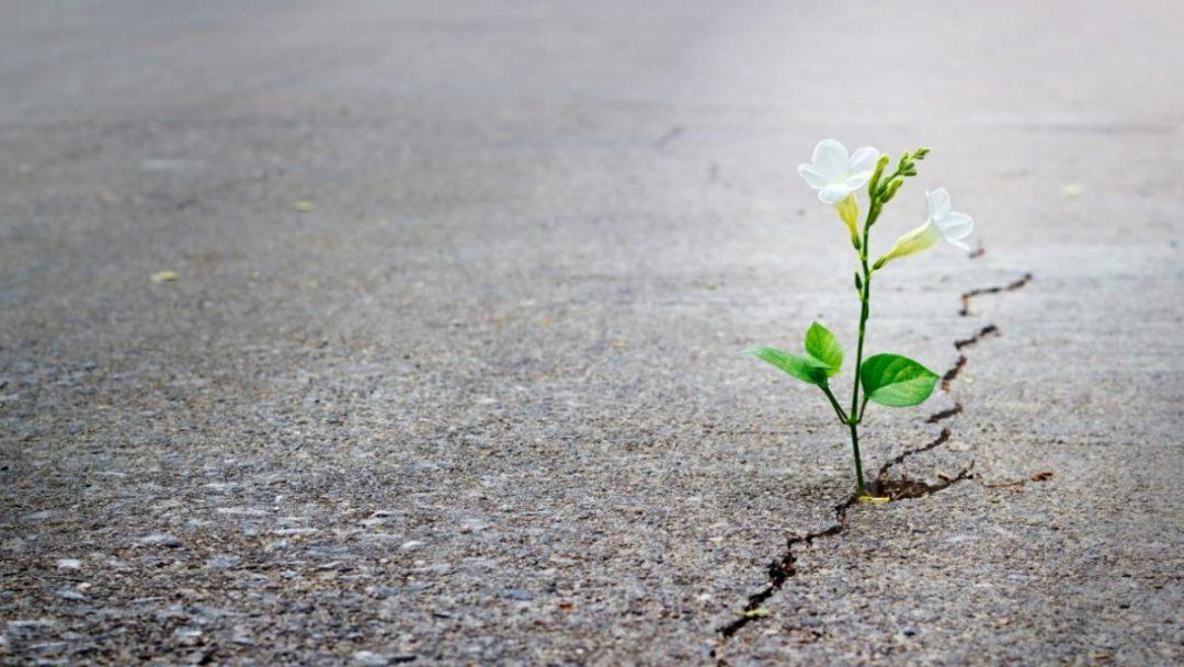 De las crisis podemos renacer: la resiliencia. Casaleiz Psicólogo Málaga